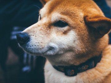 hund allergie